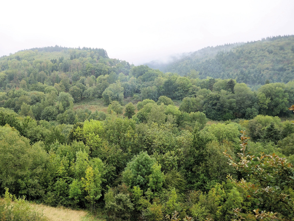 Forêt de la Montagne Noire, Vaudreille